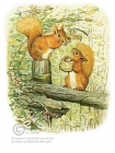 Beatrix Potter - Squirrel Nutkin