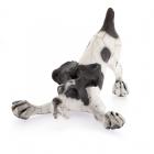 Bounder Dog