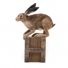 H is for hare I