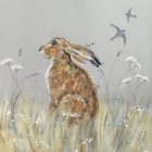Hare & Swifts