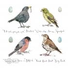 Madeleine Floyd - Garden Birds