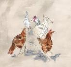 Scratching Chickens