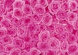 Giftwrap - Roses (Pink)