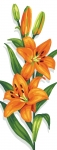 Royal Paris Tapestry/Needlepoint - Tiger Lilies