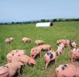 Free Range Pork - Kendalls Farm Butchers