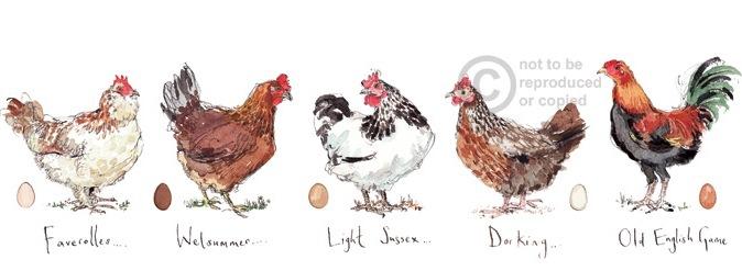 Madeleine Floyd Chickens Madeleine Floyd Prints