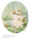 Beatrix Potter - Jeremy Fisher
