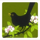 Blackbird & Blossom Coaster - Set of 2
