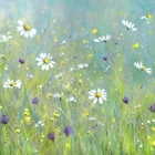 Daisy Meadow - Limited Edition Print on Canvas