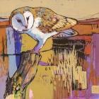 Daniel Cole Owl