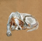 Dozing Dog