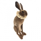Hare with Cream Ruff