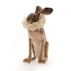 Hare with Cream Ruff
