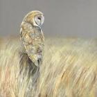 Late Summer Owl