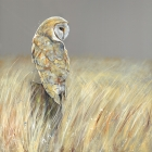 Late Summer Owl - Large Canvas