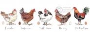 Madeleine Floyd - Chickens