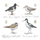 Madeleine Floyd - Coastal Birds
