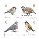 Madeleine Floyd - Farmland Birds