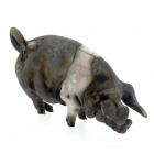 Mini Pig - Saddleback