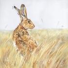 Northumberland Hare