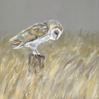 Owl Waiting - in the dunes