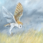 Owl in the Meadow