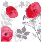Poppies - Card