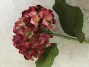 Purple & Red  Hydrangea
