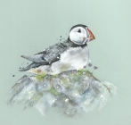 Sitting Puffin Print