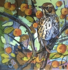 Song thrush and Crab Apples