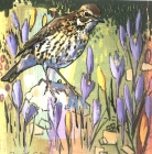 Songthrush and crocuses