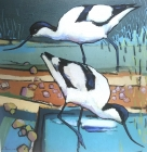 Two Avocets Print