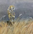Early Evening Owl - original painting by Nicole Fenwick
