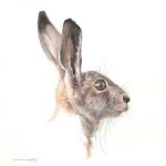 Hare II - Harvey - Mark Langley