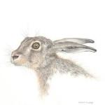 Hare V - Harriet - Mark Langley