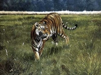 Spencer Hodge - Ranthambhore WAS £375, NOW £100