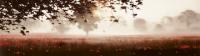 The Longest Day - John Waterhouse *SOLD*