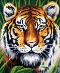 Collection D' Art Printed Tapestry/Needlepoint – Tiger