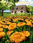 Margot de Paris Tapestry/Needlepoint Canvas – Yellow Field Flowers