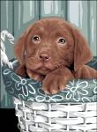 Royal Paris Tapestry/Needlepoint Canvas - Puppy in Basket (Chiot dans un Panier)