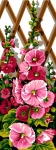SEG de Paris Tapestry/Needlepoint – Pink Hollyhocks