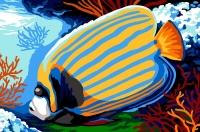 SEG de Paris Tapestry/Needlepoint Canvas – Emperor Angelfish