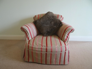 Oyster Brown Cushion